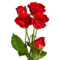 Buy Red spay roses by the piece with the delivery to any city